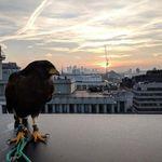 HF Pest & Bird Control profile image.