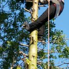 mdh tree and garden care