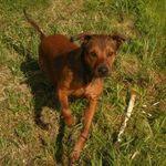 Calhoun's Dog Training profile image.