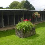 church farm boarding kennels profile image.