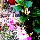 Bayside Floral Design