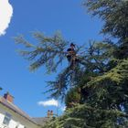 SkyHigh Tree Services