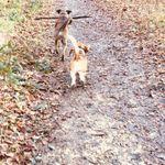 Healthy houndz profile image.