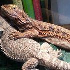Noah's Ark Reptile Experiences