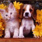 The Fur Babies Only Club. Dog Walking/Pet Sitting profile image.