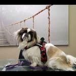 LoveJoy counseling profile image.