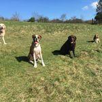 Percy & Pals Pet Care Services profile image.