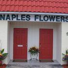 Naples Flowers
