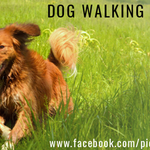 PictusPaw Dog Walking profile image.
