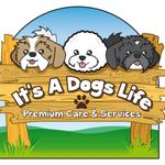 Its a Dogs Life Leicestershire profile image.