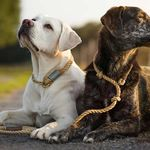 Sapphire k9 solutions profile image.