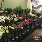 The Flowershop of ashbourne  profile image.