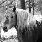 Lisa Marie Vance Photography profile image.