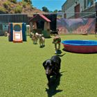 Xena's Clubhouse for Dogs