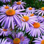 EXOTIC FLORIST  OF PLANTATION profile image.