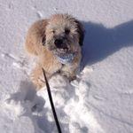 Strut Your Pup profile image.