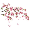 Cherry blossom counselling  profile image