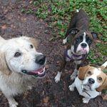 Jake's adventures Pet Care  profile image.