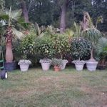 CT Palm Trees LLC profile image.