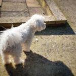 Precious Paws profile image.