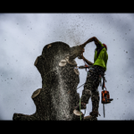 Treefirm Ltd profile image.