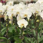 South Coast Orchids profile image.