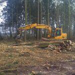 DNB Tree Surgery Ltd profile image.