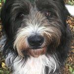 For Pet's Sake profile image.