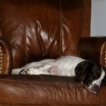 Woofers Home Dog Care profile image.