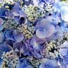 Milton Keynes florists profile image