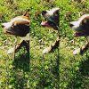 DingoGirl Dog Training & Behavior Counseling profile image
