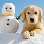 Kromer's Dog Walkers profile image.