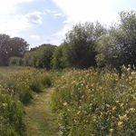 Eden Valley Woodland Burial Ground profile image.
