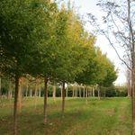 Pixton Woodlands profile image.