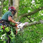 Acer Tree Services  (Hereford) Ltd profile image.
