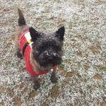 Caversham dogs profile image.