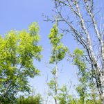 Willow Tree Care profile image.