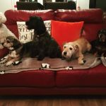 New Forest Dog Sitters  profile image.