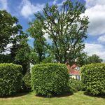 Marchant tree care  profile image.