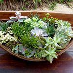 Isa Entreflores - Flower Studio profile image.