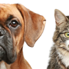 Pippas pet care profile image