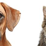 Pippas pet care profile image.