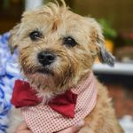 Paws in Residence - Dog boarding & Day care profile image.