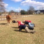 C 2 it Equine Therapy Ranch profile image.