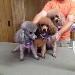 Southern Belle Pet Grooming & Spa Services profile image.