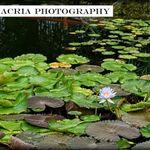 Trinacria Photography profile image.