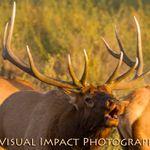 Visual Impact profile image.