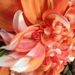 FioriDesigns.cc | JustAddWater.Florist profile image.