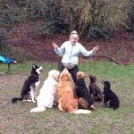Top Dog Training School profile image.