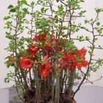 Exquisite Events Florals Atelier profile image.